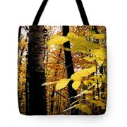 Autumn Birch Trees Tote Bag
