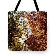 Autumn Chestnut Canopy   Tote Bag