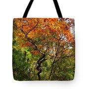 Autumn Color At Old Woman Creek 2 Tote Bag