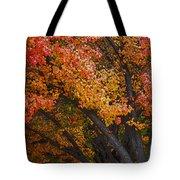 Autumn Color Tote Bag