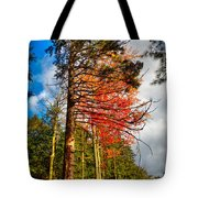 Autumn Color In The Trees Tote Bag