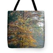 Autumn Cypress Tote Bag