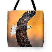 Autumn Eagle Tote Bag