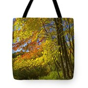 Autumn Forest Scene In West Michigan Tote Bag