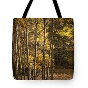 Autumn Forest Scene With Birches In West Michigan Tote Bag