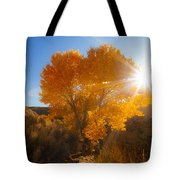 Autumn Golden Birch Tree In The Sun Fine Art Photograph Print Tote Bag