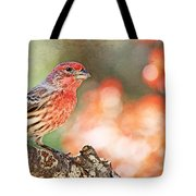 Autumn Male House Finch 1 Tote Bag
