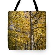 Autumn Orange Forest Colors At Hager Park No.1189 Tote Bag