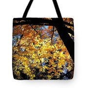 Autumn Splendor 3 Tote Bag