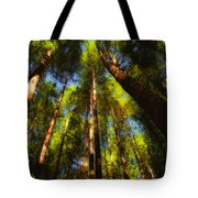 Autumn Sunlight Cast On Majestic Green Oregon Old Growth Forest  Tote Bag