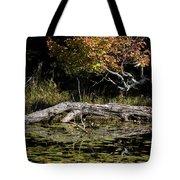 Autumn Swamp Tote Bag