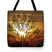 Autumn Tree In The Sunset Tote Bag