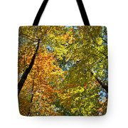 Autumn Woods Sky View Tote Bag