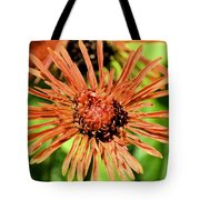Autumn's Gerber Daisy Tote Bag