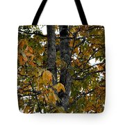 Autumn's Golden Hickory Tree Tote Bag