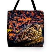 Autumns Sleepy Duck Tote Bag