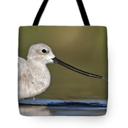 Avocet Feeding Tote Bag