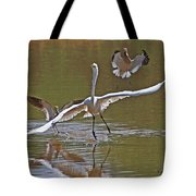 Avocets Chase Off The Egret Tote Bag