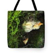 Awe Inspiring Fungi Three Tote Bag