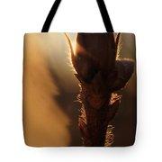 Azalea Flower Bud Sunrise - 1 Tote Bag