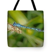 Azure Damselfly  Tote Bag