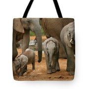 Baby African Elephants Tote Bag