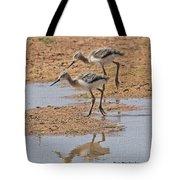 Baby Avocets At Grp Tote Bag