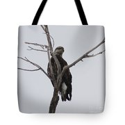 Baby Bald Eagle Tote Bag