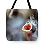 Baby Bird Tote Bag