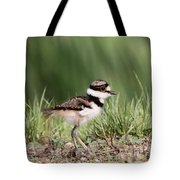 Baby - Bird - Killdeer Tote Bag