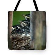 Baby Birds Tote Bag
