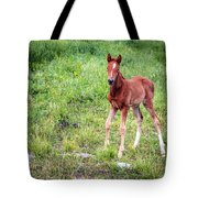 Baby Colt Tote Bag
