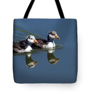 Baby Coots Tote Bag