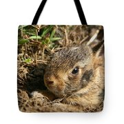 Baby Eastern Cottontail Tote Bag