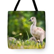 Baby Duckling In The Morning Light Tote Bag