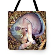 Baby Eastern Gray Squirrel Tote Bag by Millard H. Sharp