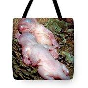 Baby Eastern Gray Squirrels Tote Bag