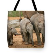 Baby Elephant Trio Tote Bag