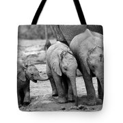 Baby Elephant Trio Bw Tote Bag