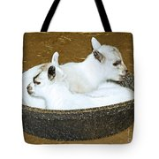 Baby Goats Lying In Food Pan Tote Bag