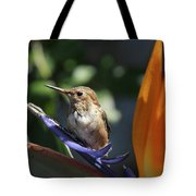 Baby Hummingbird On Flower Tote Bag