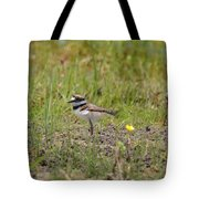 Baby Killdeer Tote Bag