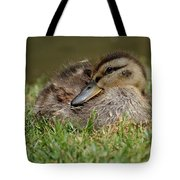 Baby Mallard Tote Bag