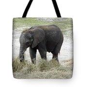 Baby Mavi Tote Bag