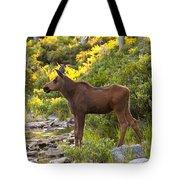 Baby Moose Baxter State Park Tote Bag