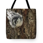 Baby Nuthatch Tote Bag