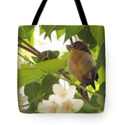 Baby Oriole Tote Bag
