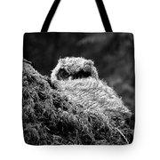 Baby Owl 3 Tote Bag