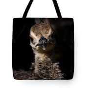 Baby Peacock Tote Bag