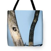 Baby Red-headed Woodpecker Tote Bag